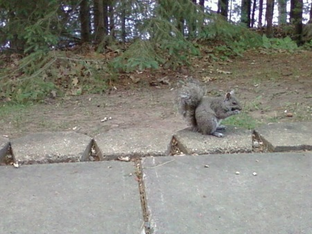 Squirrel Taking In The Sights